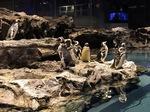 すみだ水族館ペンギン.jpg